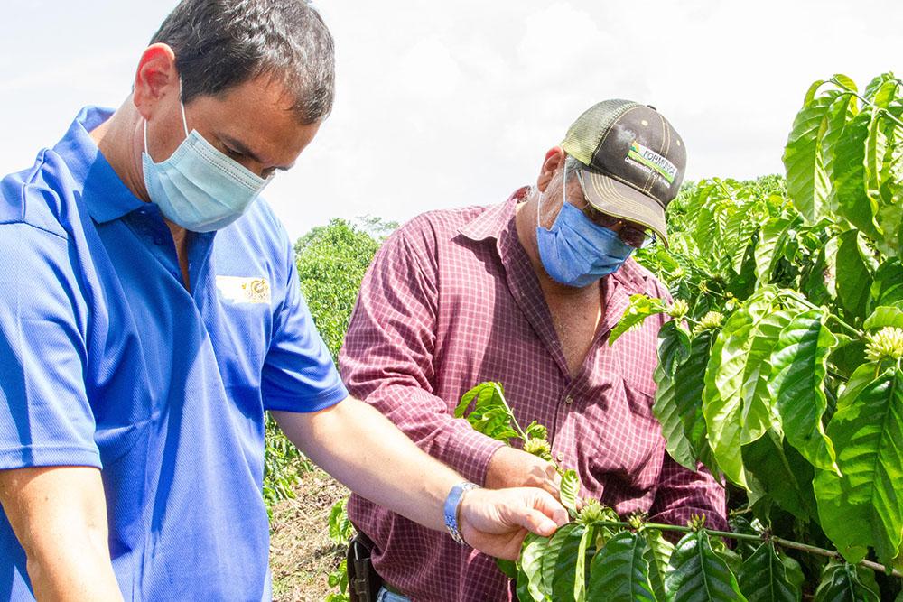 Café Presto de Nestlé remarca su compromiso con el desarrollo de la caficultura nicaragüense en el Día Internacional del Café