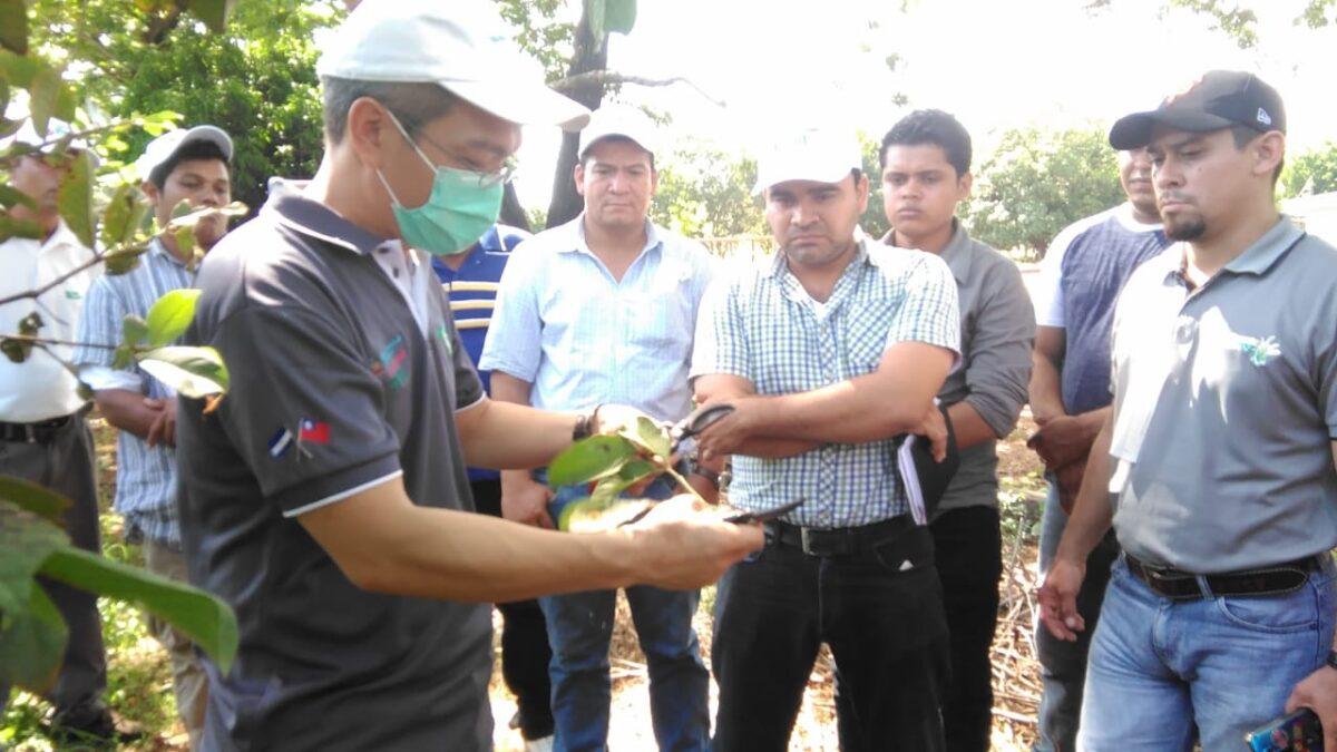 Misión Técnica de Taiwán realiza Taller para el incremento de la producción en el sector frutícola