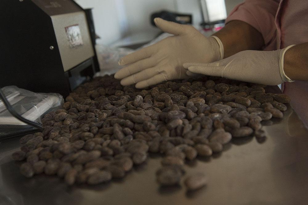 MLR Forestal participa en Estrategia Regional de Cacao